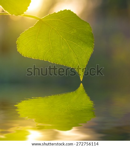closeup green leaf reflected in a water - stock photo