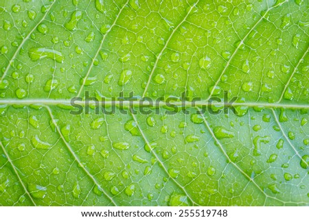 closeup green leaf texture detail - stock photo