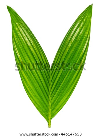 Closeup green leaf with isolated background