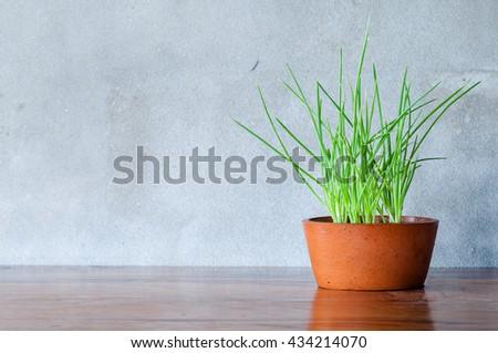 Closeup green onion growing in pot - stock photo