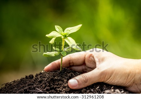Closeup hand planting young tree in soil on green background,save world concept - stock photo