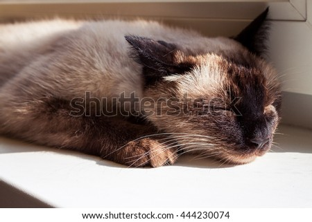 closeup head of sleeping cat stretched on white table under bright daylight - stock photo