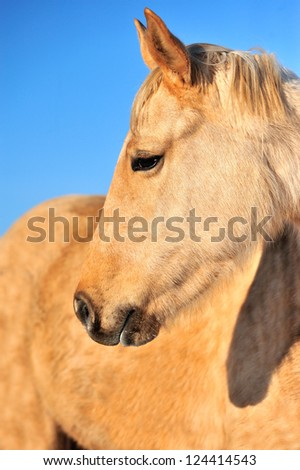 Closeup horse portrait on the sky background
