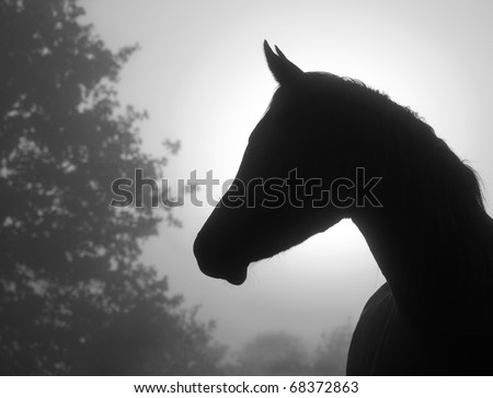 Closeup image of a refined Arabian horse's profile against heavy fog and sunrise, in black and white