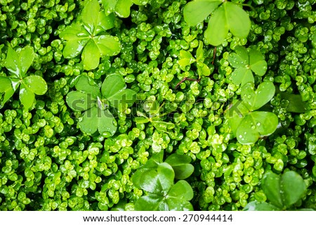Closeup image of fresh lush green vegetation growth - stock photo