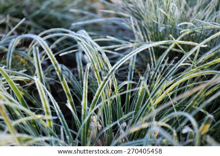 Closeup image of green frozen grass in the late fall  - stock photo