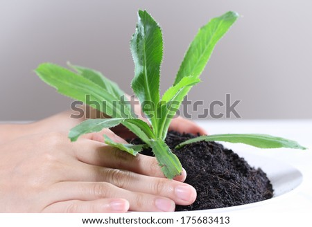 closeup image of hand holding and caring a young green plant in soil