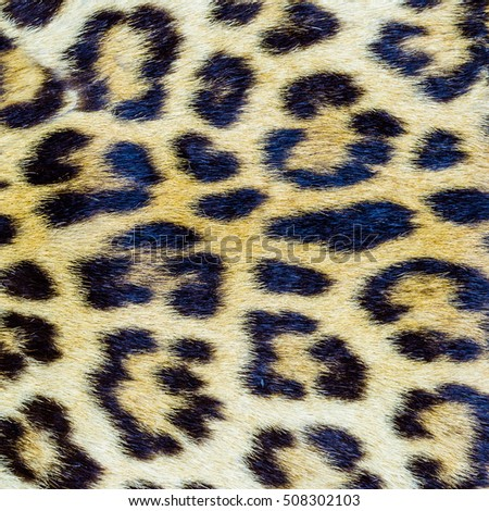 Closeup image of real tiger hair pattern, for background use.