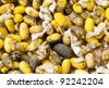 Closeup image of silkworm  spawn and cocoon - stock photo