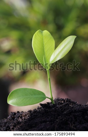 closeup image of young green plant in soil outdoor