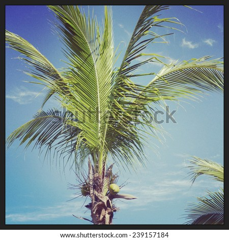 closeup instagram of palm tree swayingin the wind - stock photo