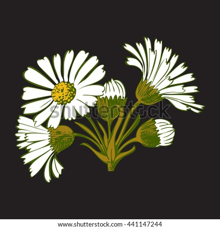 Closeup isolated blooming green floral white spring eco flower organic leaf line yellow botanical curve symbol botanic summer pen drawing paint black daisy chamomile ink illustration flora stem object - stock photo