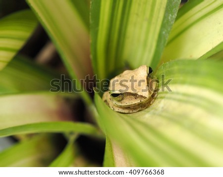 Closeup little frog on plant