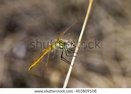 Closeup macro shot of beautiful dragonfly with amazing colors resting on a twig - stock photo