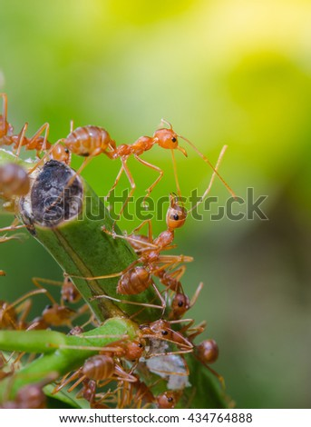 Closeup many red ants on the branches of trees - stock photo