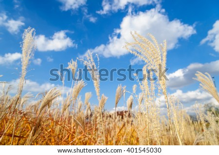 closeup meadow. grass , Beautiful Nature landscape - stock photo