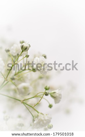 Closeup of a baby breath flower with vignette