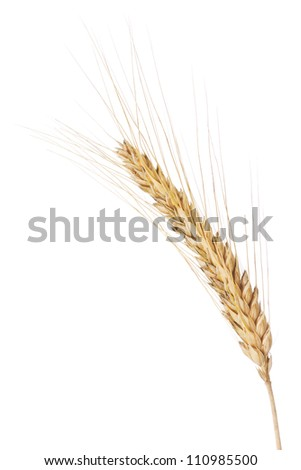 Closeup of a barley ear over a white background - stock photo