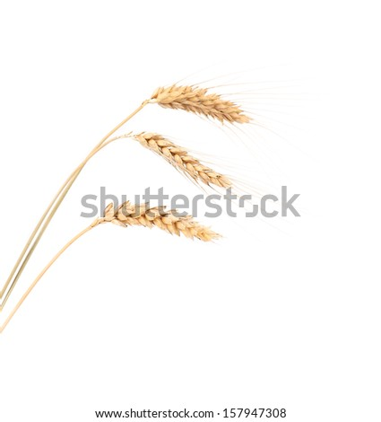 Closeup of a barley ears over a white background