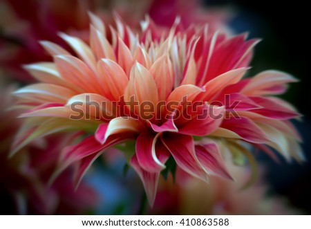 Closeup of a beautiful multicolored dahlia flower - soft focus - blurred - artistic  - stock photo