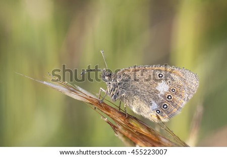 Closeup of a brown wet butterfly on a plant straw