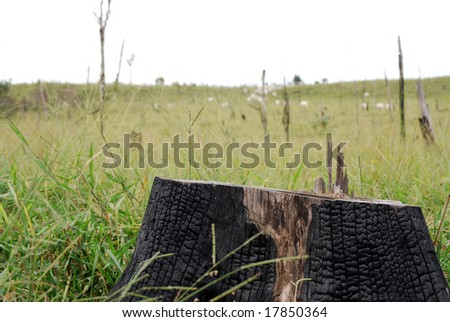 Closeup of a burned stump, all that is left of a Brazilian rainforest after it was cut and burned to expand cattle ranching, visible in the background - stock photo