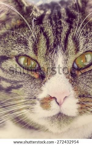 Closeup of a cat - stock photo