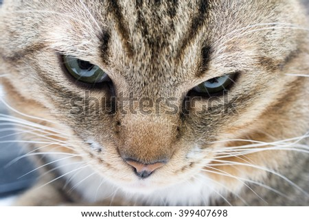 Closeup of a cat face