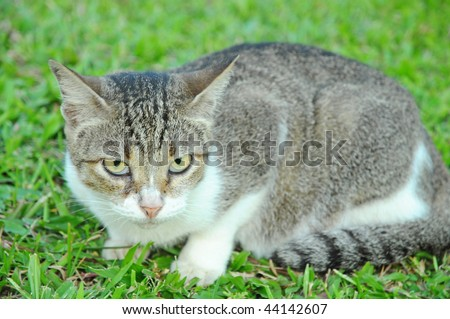 Closeup Of A Cat On The field