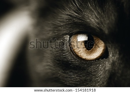 closeup of a cat's eye, toned sepia