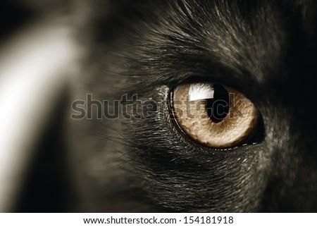 closeup of a cat's eye, toned sepia - stock photo