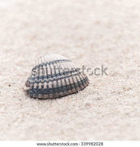 cockles pictures cockles stock photos images pictures shutterstock 5732