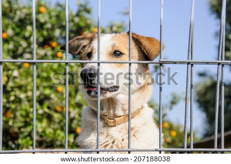 Closeup of a dog looking through the bars of a fence, outdoor - stock photo
