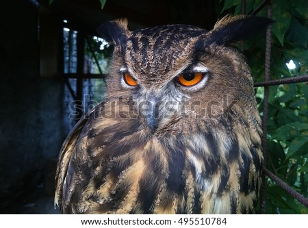 Closeup of a Eurasian Eagle-Owl in a cage