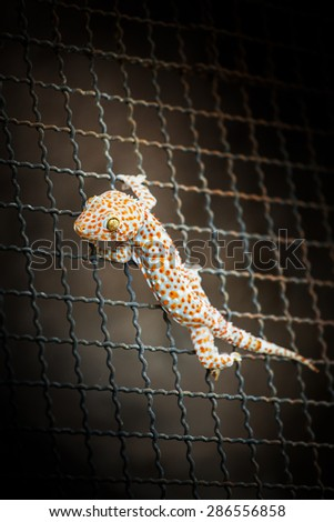 Closeup of a Gecko on steel mesh - stock photo