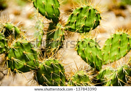 Closeup of a green cactus with sharp thorns - stock photo