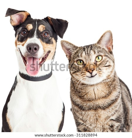 Closeup of a happy and smiling tabby cat and mixed breed dog looking forward into the camera