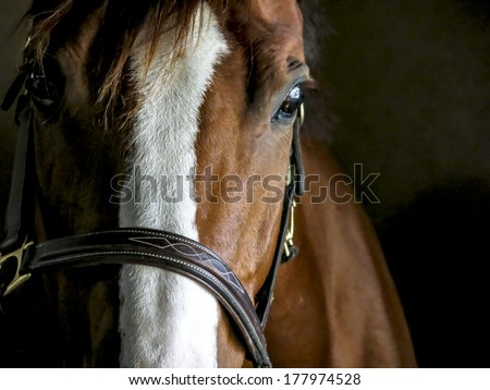 Closeup of a Horse in a Stable - stock photo
