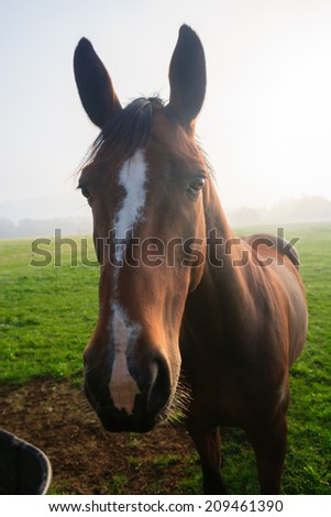 Closeup of a horse on a foggy morning, Stowe, Vermont, USA - stock photo