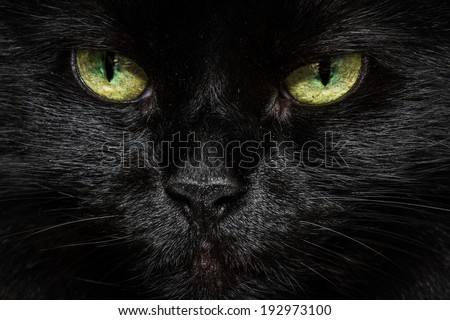closeup of a long haired black cats face with glowing yellow green eyes - stock photo