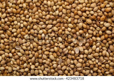 Closeup of a lot of coriander seeds - stock photo