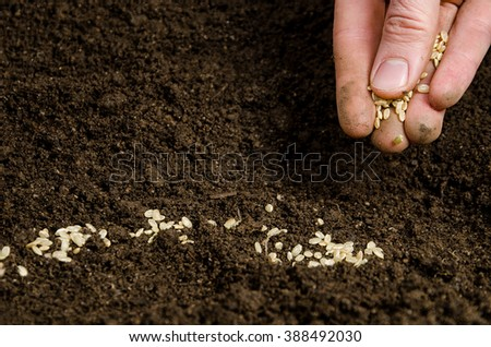 Closeup of a males hand planting seeds - stock photo