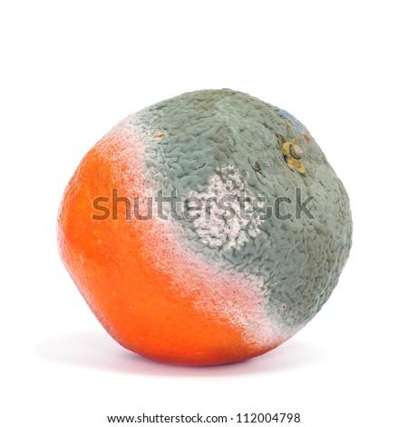 closeup of a moldy orange on a white background - stock photo