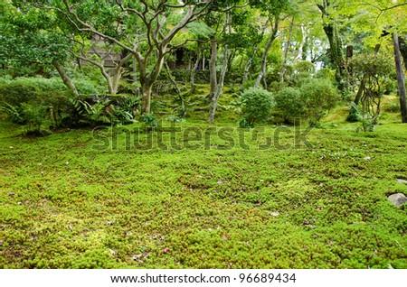 Closeup of a moss in a japanese garden - stock photo
