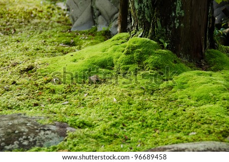 Closeup of a moss in a japanese garden with stones and tree - stock photo