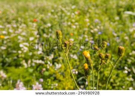 Closeup of a multicolored border with wild flowers and plants next to a field. The field edge is sown for the sake of the preservation of biodiversity for the benefit of bees and butterflies. - stock photo