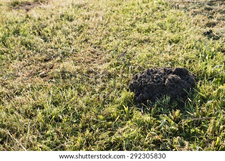Closeup of a newly dug molehill in the grass on a summer day in the low evening sun. - stock photo