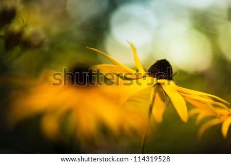 Closeup of a orange gold garden flower. - stock photo