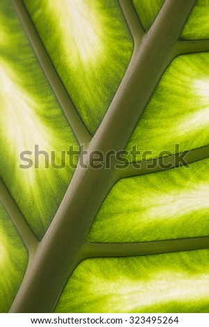Closeup of a palm leaf in back light - stock photo