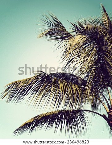Closeup of a palm tree against clear blue sky with instagram-style filter added for vintage effect.